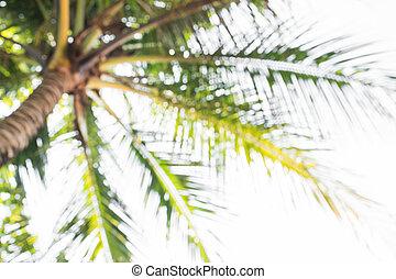 cocosnoot, abstract, bomen, vaag, focus., diepte, achtergrond