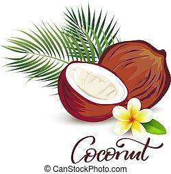cocosnoot, en, plumeria, bloem, illustratie