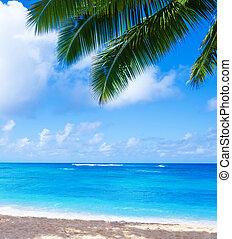cocosnoot, hawaii, boompje, palm, kauai, strand, zanderig