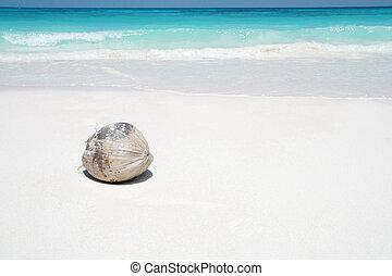 cocosnoot, op, strand
