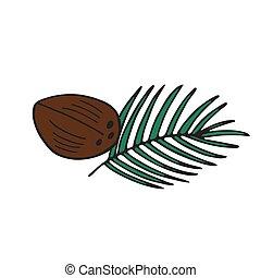 cocosnoot, vrijstaand, vector, achtergrond, witte , pictogram