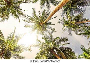 cocotier, perspective, arbres, vue