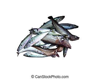 Fresh fish cod and mackerel these fish were harvest useing a handline off Lahave Lunenburg County Nova Scotia Canada