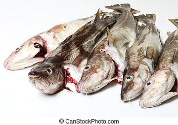 Cod fish - Raw cod fish on white background