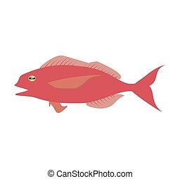 cod fish sealife food ocean