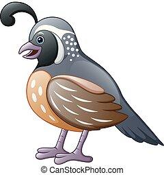 codorniz, cute, caricatura, pássaro