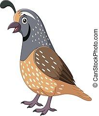 codorniz, fundo branco, caricatura, sorrindo, pássaro