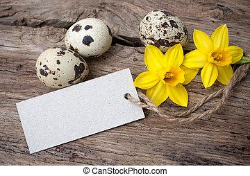 codorniz, ovos, tag, narcisos silvestres
