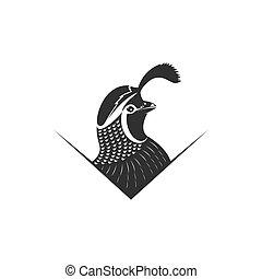 codorniz, vetorial, ilustração, logotipo