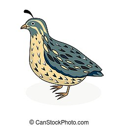 codorniz, vetorial, -, pássaro, ilustração