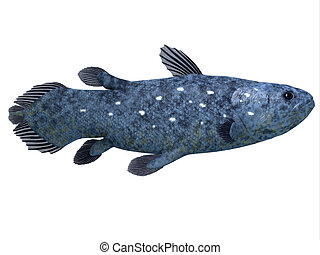 Coelacanth Fish on White