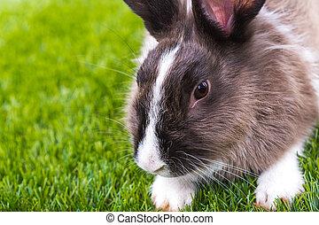 coelho, e, ovos páscoa, em, grama verde