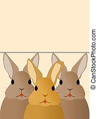 coelhos, três