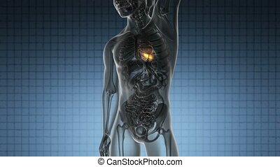 coeur, balayage, science, jaune, anatomie, incandescent, humain