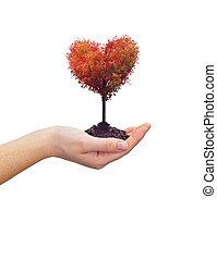 coeur, femme, arbre, tenue, main