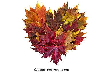 coeur, feuilles, couronne, couleurs, automne, mélangé, érable