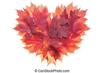 coeur, feuilles, formé, forme, érable, rouges