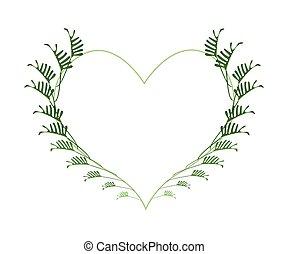 coeur, feuilles, frais, philodendron, forme