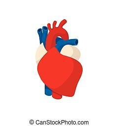 Coeur humain dessin anim illustration coeur vecteur - Dessin coeur humain ...