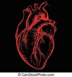 Coeur dessin humain drawing coeur image humain - Dessin coeur humain ...