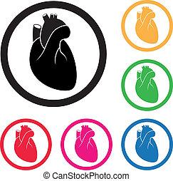 coeur, icône, vecteur, humain, cardio
