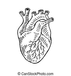 coeur, main, illustration., humain, dessin
