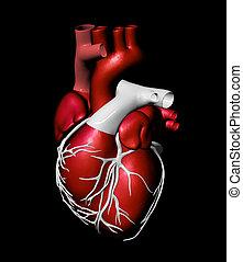 coeur, modèle, artificiel, humain