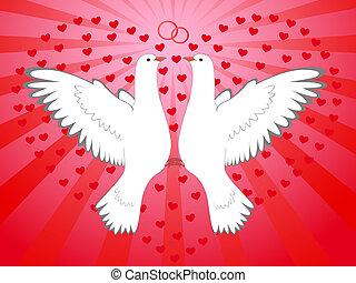 coeur, pigeons
