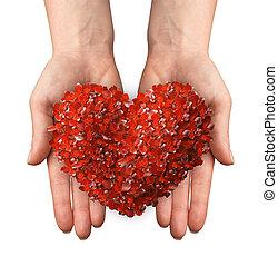 coeur, pousse feuilles, formé, tenant mains, rouges