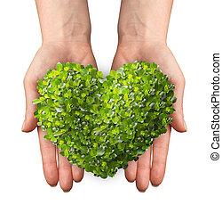 coeur, pousse feuilles, formé, vert, tenant mains