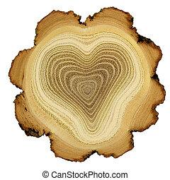 coeur, -, section, anneaux, croix, arbre, croissance, acacia