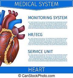 coeur, système médical, illustration, réaliste, vecteur