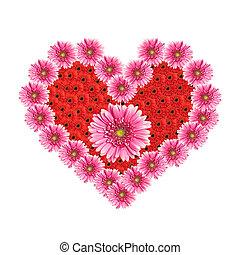coeur, valentine, isolé, gerbera, arrière-plan., fleurs blanches, jour