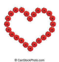 coeur, valentine, isolé, gerbera, arrière-plan., fleurs blanches, jour, rouges