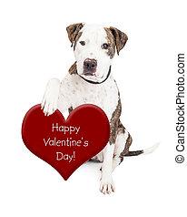 coeur, valentines, chien, taureau, fosse, jour