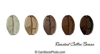 Coffee bean roasting stages - Coffee beans showing various...