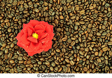Coffee beans and flower