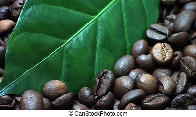 Coffee beans. Coffee tree leaves
