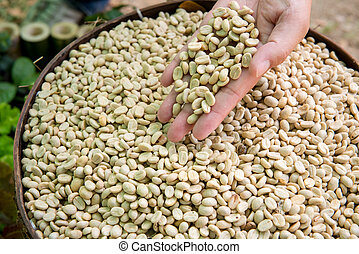 Coffee beans on a lined tray. Whole roasted And have not roasted