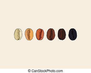 Coffee beans showing various stage of roasting from the green bean through to a dark roast. EPS10 vector format