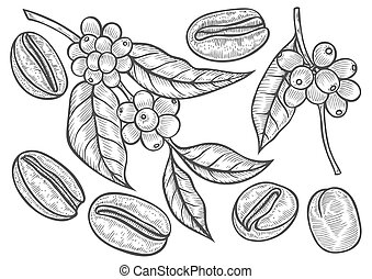 Coffee branch illustration