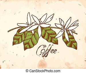 Coffee Flowers