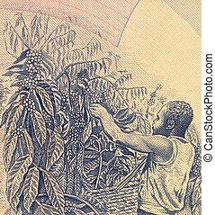 Coffee Harvesting on 500 Shillings 1983 Banknote from Uganda...