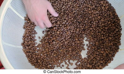 Coffee house worker checking roasted coffee beans in...
