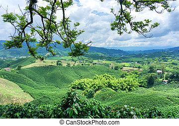 Coffee Landscape in Colombia - Coffee landscape on a...