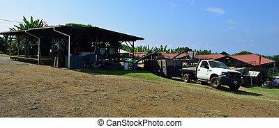 coffee plantation in Hawaii