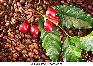 Coffee. Real coffee plant on roasted coffee background....