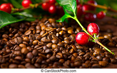 Coffee. Real coffee plant with red beans on roasted coffee beans background