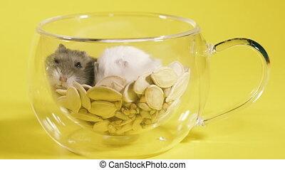 coffee., rodents., chomiki, filiżanka, dwa, dom, ustalać, ...