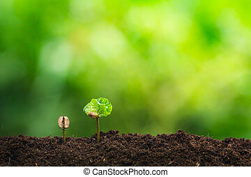 coffee seedling in nature plant a tree concept, Young hand